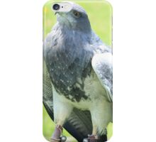 Black Chested Buzzard Eagle iPhone Case/Skin