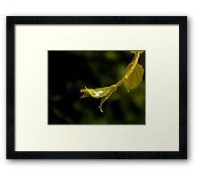 Droplet 2 Framed Print