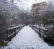 Winter Wonderland, Marie Curtis Park by Amanda  Kendall