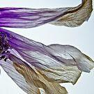 Flow Like a Flower by photojeanic