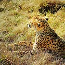 cheetah3 by shaft77
