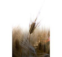 A Successful Harvest Photographic Print