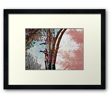 SMALL FOREST Framed Print