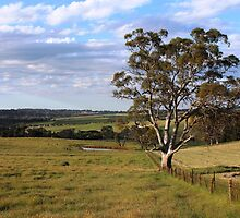 Sims Road, Mount Barker, South Australia by Michael Humphrys