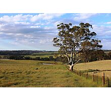 Sims Road, Mount Barker, South Australia Photographic Print