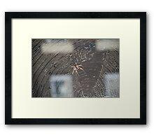 Deadly Spider Framed Print