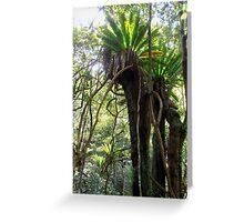 Rainforest, Minnamurra Falls, Illawarra, Australia. Greeting Card