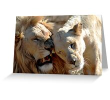 White lion nuzzle Greeting Card
