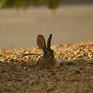 Rabbit wonder by Bonnie Pelton