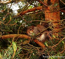 Sherwood Forest Squirrel by boudicashots