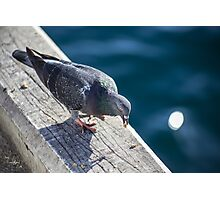 Pigeon On The Docks Photographic Print
