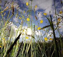 Flowers, Grass and a sunset sky by Mark Hayward