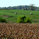 Iowa Country by Linda Miller Gesualdo