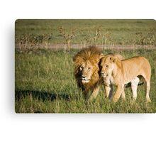 Lions, Masai Mara, Kenya Canvas Print