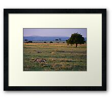 Leopard, Masai Mara, Kenya Framed Print