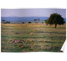 Leopard, Masai Mara, Kenya Poster
