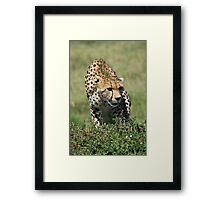 Cheetah, Masai Mara, Kenya Framed Print