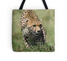 Cheetah, Masai Mara, Kenya Tote Bag
