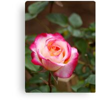 A rose by any other colour Canvas Print