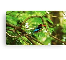 White throated Kingfisher #1 Canvas Print