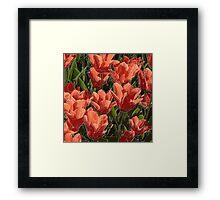 red tulips white lines Framed Print