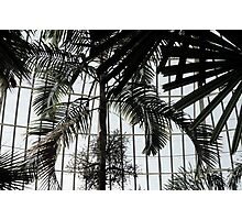 Domed Ceiling With Palms Photographic Print