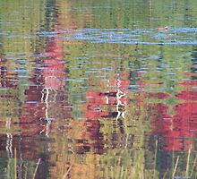 Reflections on Lake Mirage by Carolyn  Reinhart