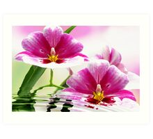 Orchid offering Art Print
