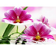 Orchid offering Photographic Print