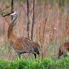 Sandhiii Crane Family by Raodk45