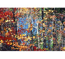 Autumn trees and water Photographic Print