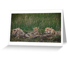 Cheetah's, Masai Mara, Kenya Greeting Card