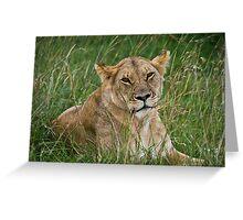 Lioness, Masai Mara, Kenya Greeting Card