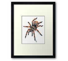 Mexican Red Knee Tarantula Framed Print
