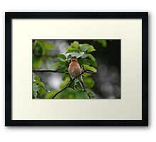 A Visit to Ripley Castle Framed Print