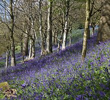 Blue Bells by Keith Larby