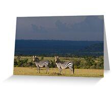 Zebra's, Masai Mara, Kenya Greeting Card