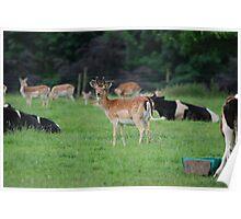 Ripley Deer Park Poster
