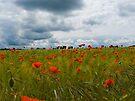 Poppy Field by Nigel Bangert