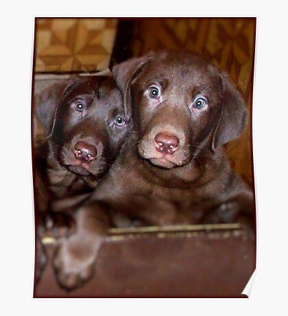 """Puppy Love"" Poster"
