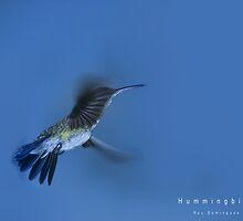 Hummingbird by Ruy Domingues