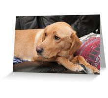 Millie a 3 year old labrador  Greeting Card
