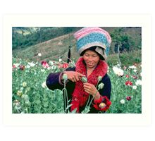 Mien woman harvesting opium poppy. Art Print