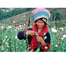 Mien woman harvesting opium poppy. Photographic Print
