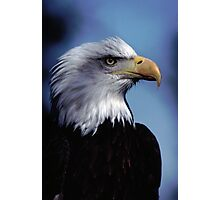 Eagle Bust Photographic Print
