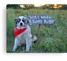 Tummy Rub Dog (Australian Shepherd) Canvas Print