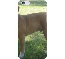 Tiny American Pit Bull Terrier iPhone Case/Skin