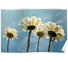 Daisies - Reach for the Sky Poster
