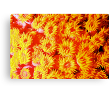 Yellow coral Canvas Print