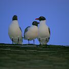 Yea, So What's with the red beak!? by Larry Llewellyn
